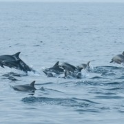 Dancing with the dolphins