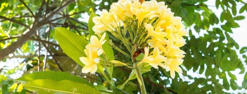 Frangipani Flower Puri Dajuma, Beach Eco-Resort & Spa, West Bali