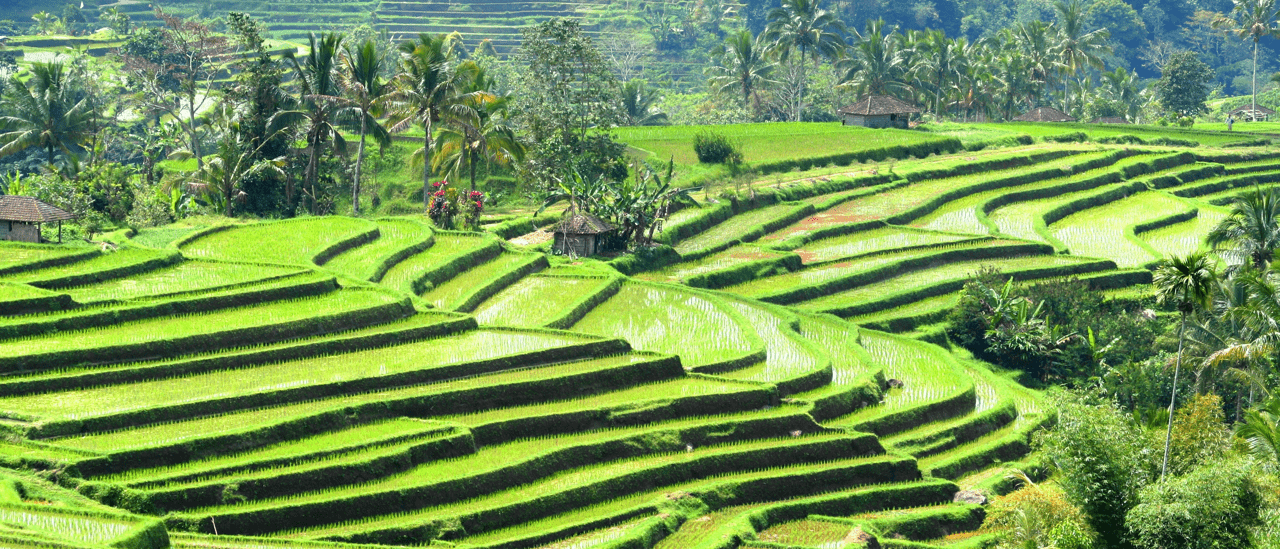 Subak in Bali : a unique rice-field irrigation system exciting to visit