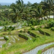 Where are the most beautiful rice paddies in Bali? Puri Dajuma, Beach Eco-Resort & Spa, West Bali