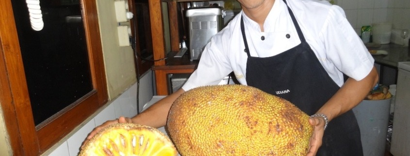 JACK FRUIT SEASON Puri Dajuma, Beach Eco-Resort & Spa, West Bali