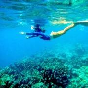 MENJANGAN DIVING Puri Dajuma, Beach Eco-Resort & Spa, West Bali diving menjangan island mermaid snorkeling Diving - Snorkeling Menjangan Sport West Bali