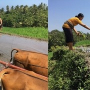 DAJUMA ECO EXPERIENCES: RICE FARMING Puri Dajuma, Beach Eco-Resort & Spa, West Bali farmer