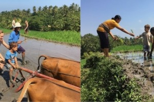 DAJUMA ECO EXPERIENCES: RICE FARMING Puri Dajuma, Beach Eco-Resort & Spa, West Bali farmer