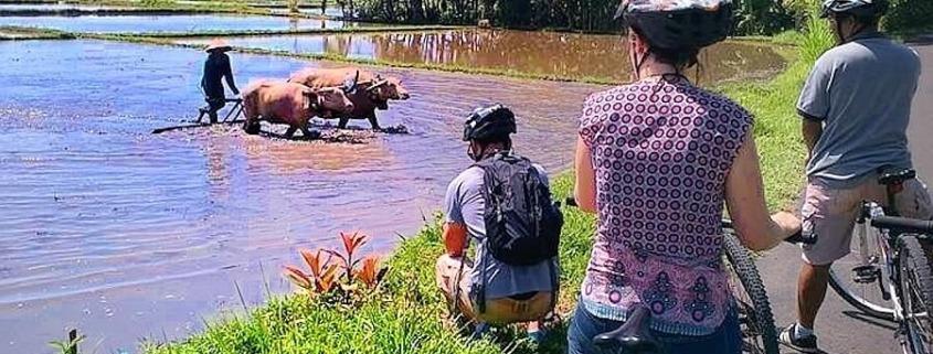 "NEW CYCLING TOUR ""TEMBLES"" Puri Dajuma, Beach Eco-Resort & Spa, West Bali"