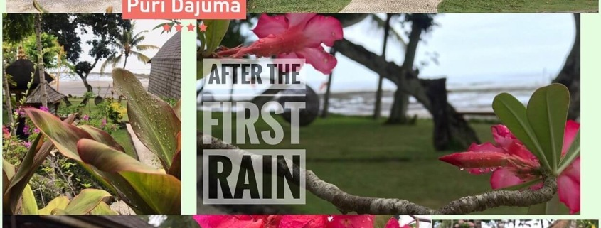 FIRST RAIN IN BALI: A BLESSING FOR FARMERS AND OUR GUESTS Puri Dajuma, Beach Eco-Resort & Spa, West Bali tropical garden