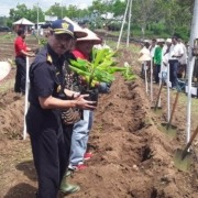 NEW BANANA FARM CLOSE TO DAJUMA Puri Dajuma, Beach Eco-Resort & Spa, West Bali pulukan west bali