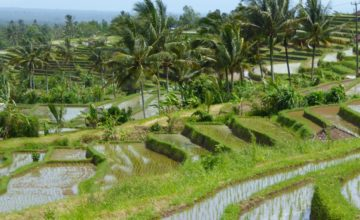 Where are the most beautiful rice paddies in Bali? Puri Dajuma, Beach Eco-Resort & Spa, West Bali 1