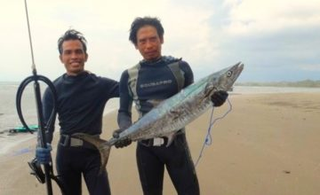 LOOKS LIKE BARRACUDA BUT IS NOT! Puri Dajuma, Beach Eco-Resort & Spa, West Bali 1
