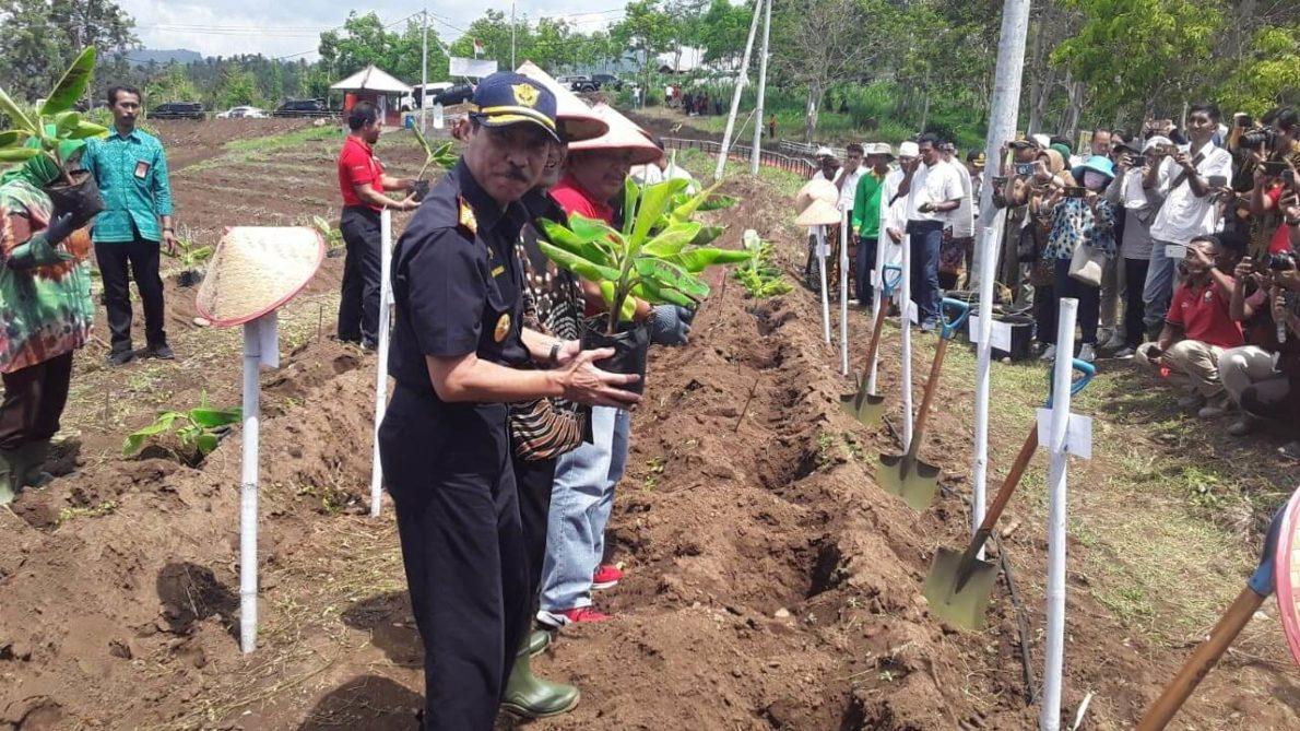 NEW BANANA FARM CLOSE TO DAJUMA Puri Dajuma, Beach Eco-Resort & Spa, West Bali pulukan west bali