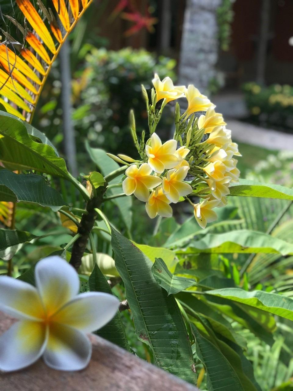 A DAJUMA EXPERIENCE Puri Dajuma, Beach Eco-Resort & Spa, West Bali